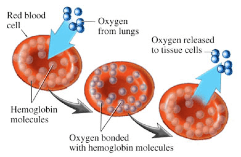 High-Altitude-Hypoxia: Many solutions to one problem
