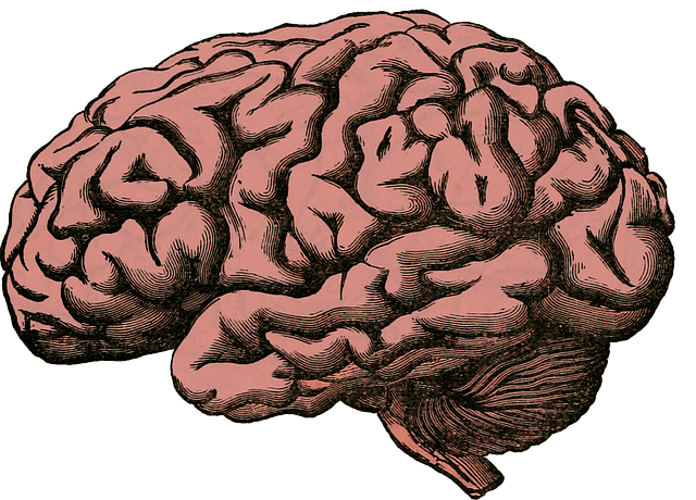 Human brain. Image courtesy of Holdentrils (Pixabay).
