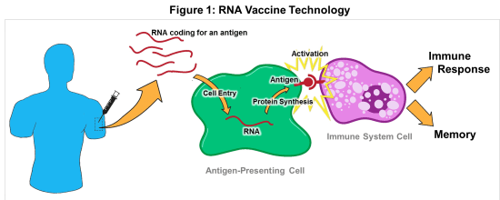 Rna Vaccines A Novel Technology To Prevent And Treat Disease Science In The News