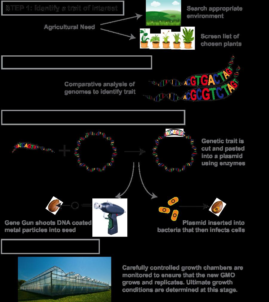 human genome project methodology
