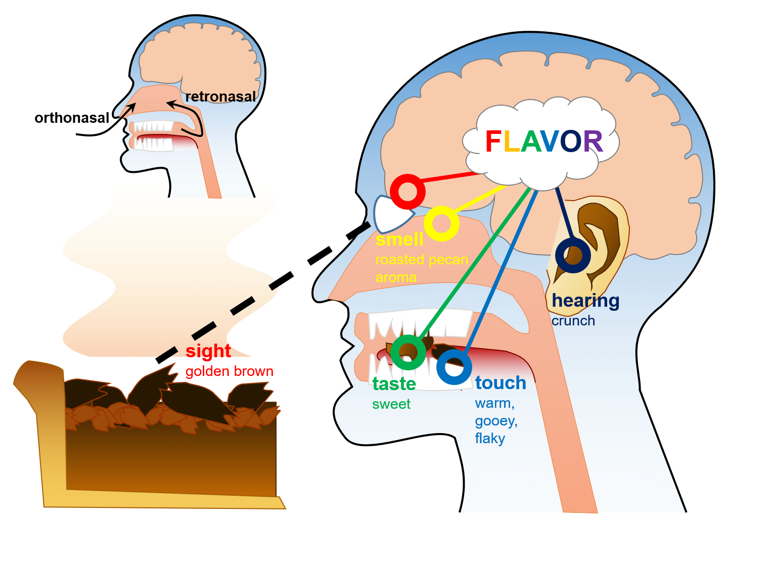 Brain Tricks To Make Food Taste Sweeter How To Transform