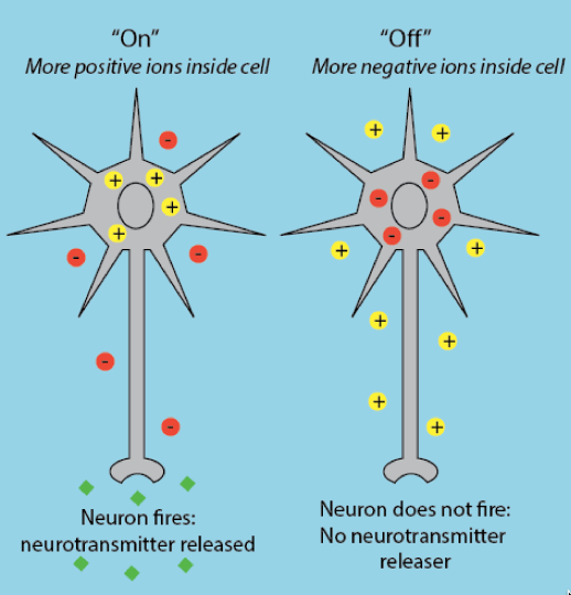 Figure 1: Understanding neuronal activity. In general, more positive ions inside the cell relative to the outside result in the neuron firing and thus releasing neurotransmitter. When more negative ions are inside the cell relative to the outside the neuron does not fire thus no neurotransmitter is released. Positive ions represented as yellow circles with '+' sign, negative ions represented as yellow circles with '-' sign, green diamonds represent neurotransmitter.