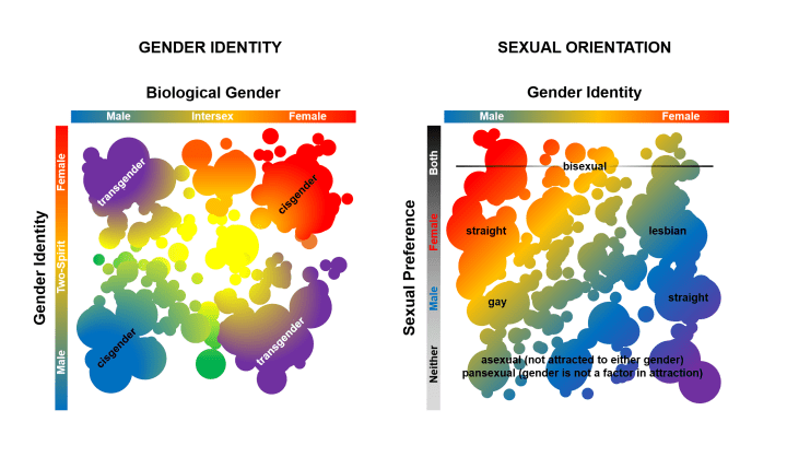 "Figure 1: An incomplete and incomprehensive representation of gender identity and sexual orientation. Transgender individuals are those who identify with a gender that differs from their assigned sex. This is a facet of identity that is completely distinct from sexual orientation. These graphs do not represent the full spectrum of either facet, as they are multidimensional. For instance, there may be genders that some identify with that are neither ""male"" nor ""female. Furthermore, there are no ""lines"" that divide these identities, and they may be considered malleable and overlapping."