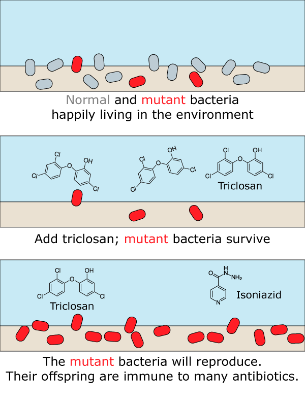 Figure 2: Environmental exposure to triclosan helps bacterial populations develop resistance mutations to triclosan and other important antibiotics