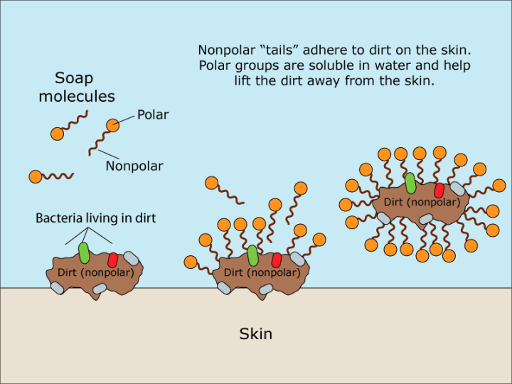 Figure 1: The amphipathic nature of soap molecules help lift dirt and bacteria off skin and into water so that they can be washed away.