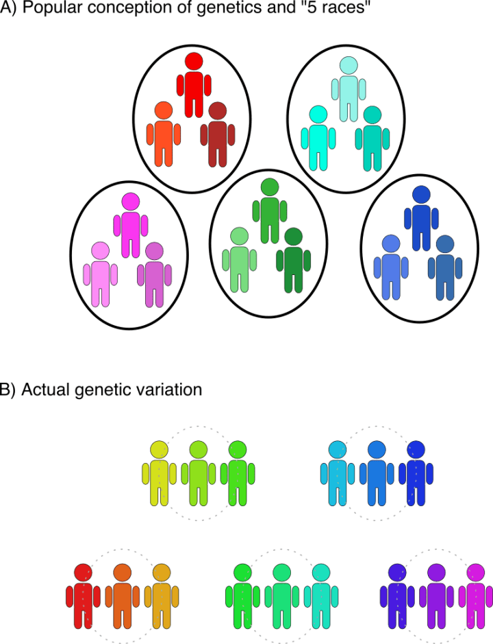 "Figure 1. 'Race' cannot be biologically defined due to genetic variation among human individuals and populations.  (A) The old concept of the ""five races:"" African, Asian, European, Native American, and Oceanian. According to this view, variation between the races is large, and thus, the each race is a separate category. Additionally, individual races are thought to have a relatively uniform genetic identity. (B) Actual genetic variation in humans. Human populations do roughly cluster into geographical regions. However, variation between different regions is small, thus blurring the lines between populations. Furthermore, variation within a single region is large, and there is no uniform identity."
