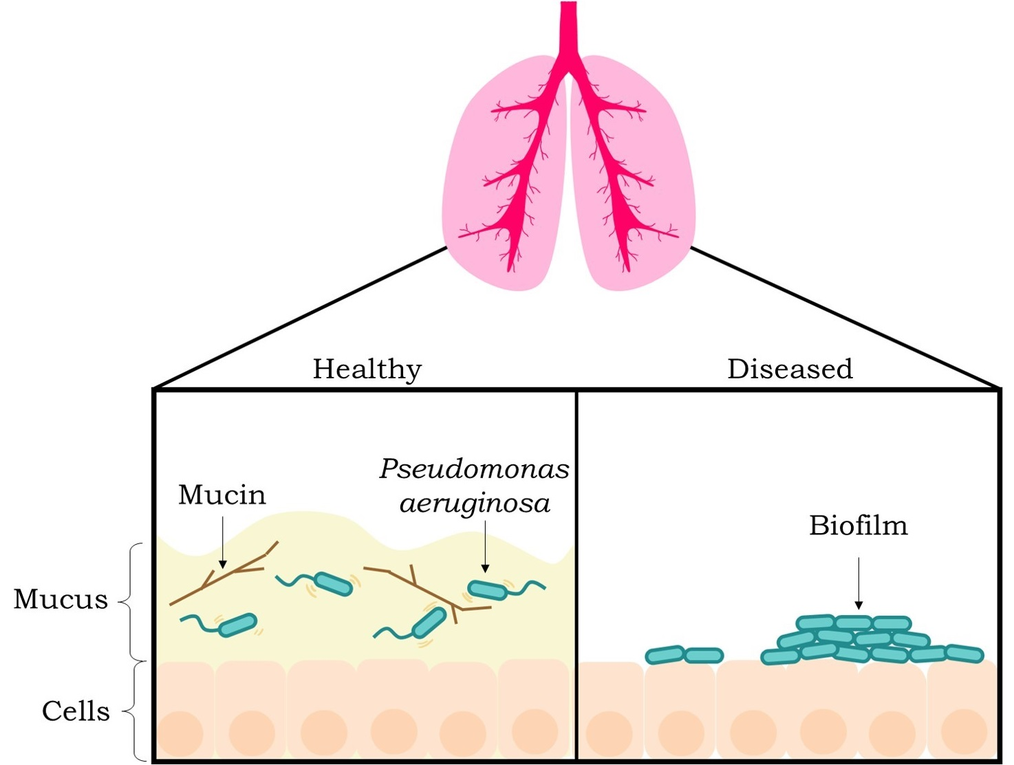 All About That Mucus: How it keeps us healthy - Science in
