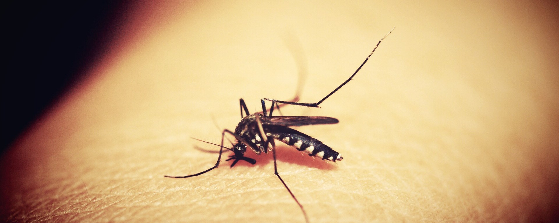 New Drug May Prevent Mosquitoes From Wanting to Bite You