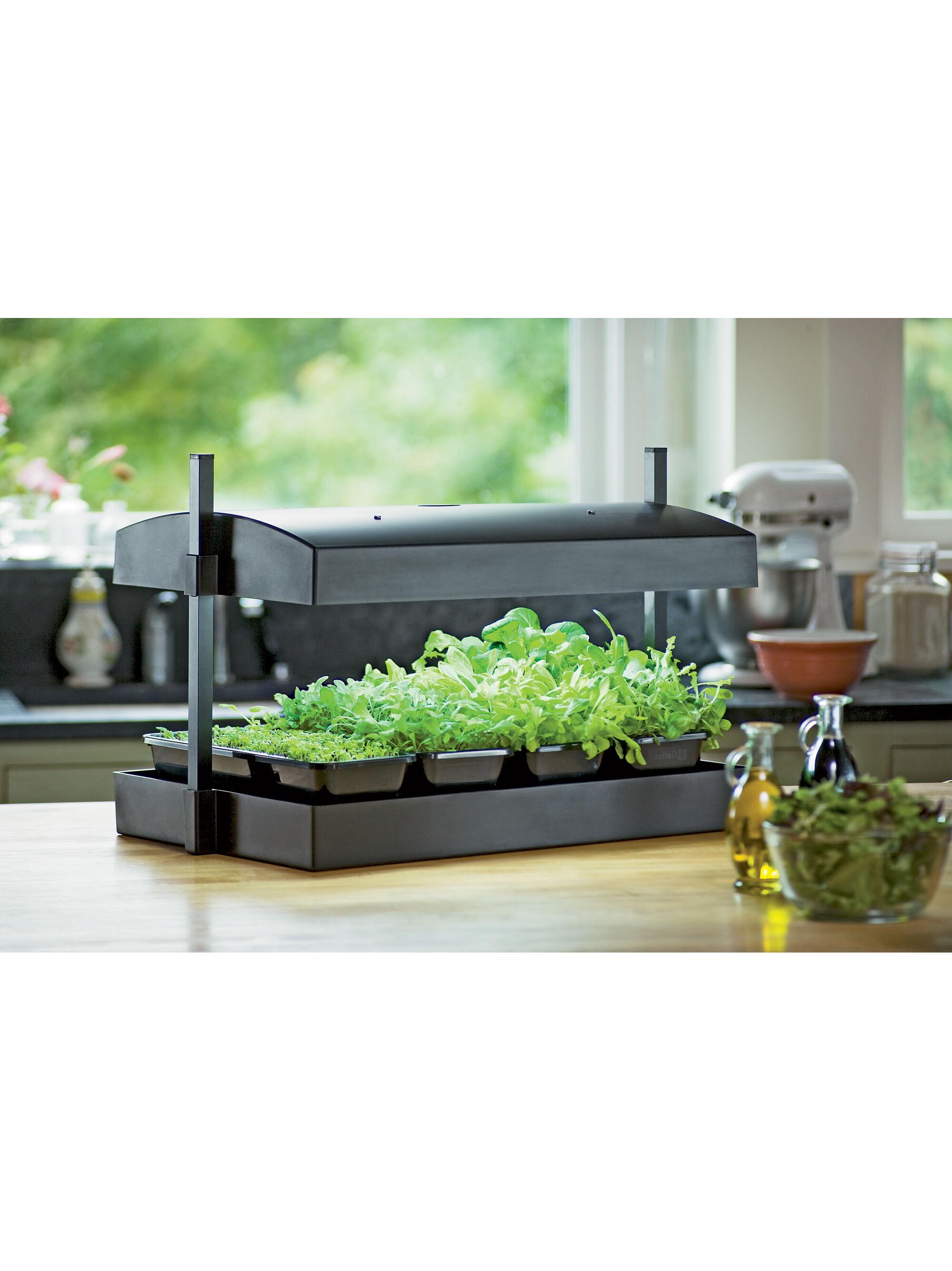 indoor gardening lights Indoor Herb Garden Kit | My Greens Light Garden | Gardener