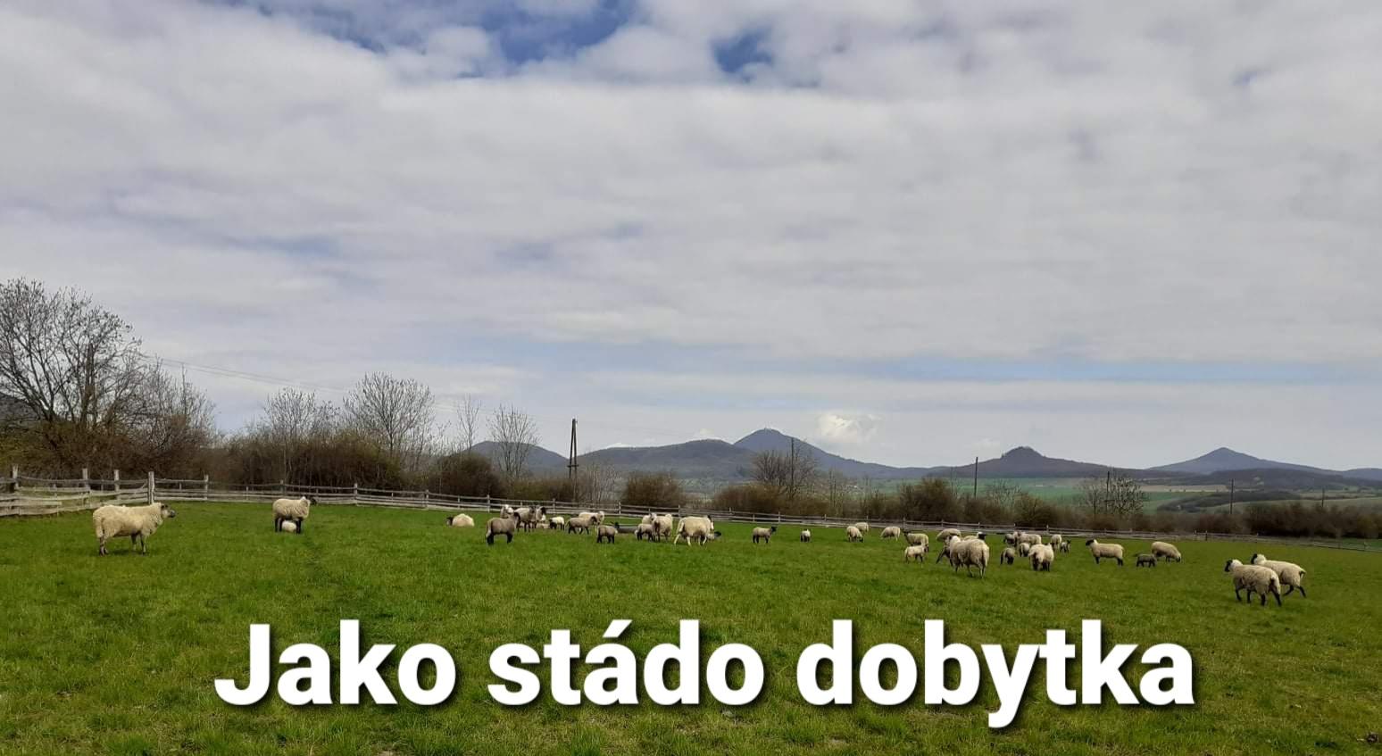 Kázání: 41. Jako stádo dobytka