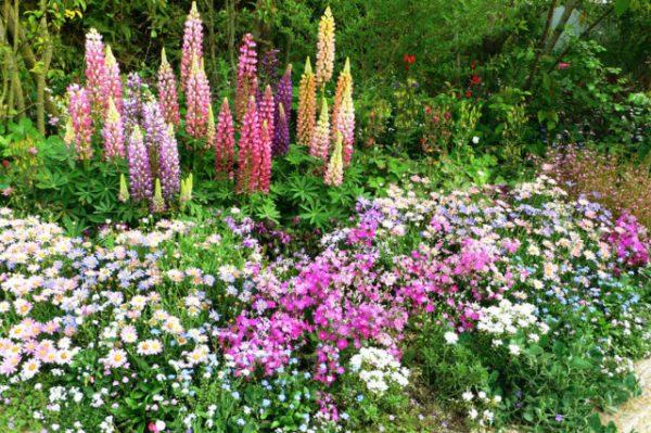 Высокие цветы многолетники: Высокие цветы-многолетники для ...