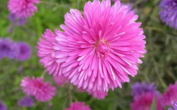 Цветы все виды фото и названия – Самые красивые и ...