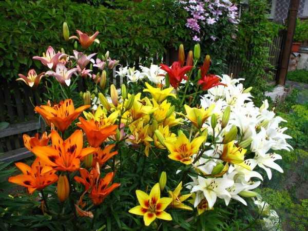 Фото многолетние цветы для сада – Каталог многолетних ...