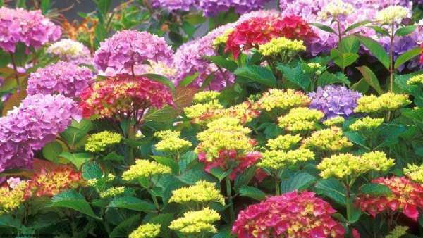 Многолетние весенние цветы – Многолетние цветы для дачи ...