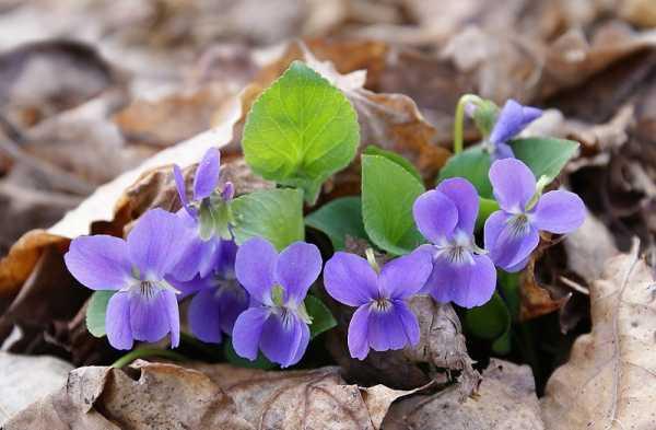 Самые ранние цветы в саду фото и названия – Первые ...