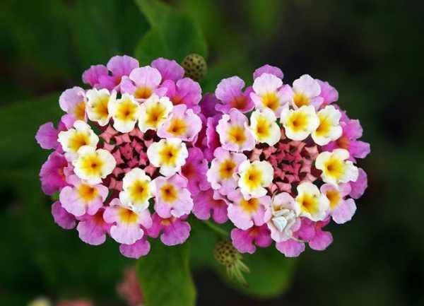 Все цветы мира фото с названиями – Энциклопедия цветов