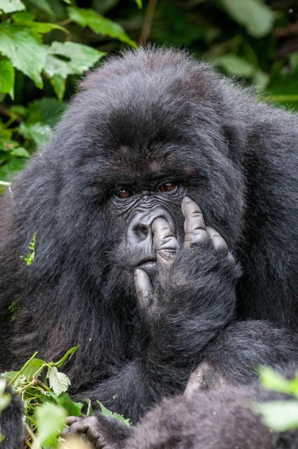 Смешные фотографии дикой природы