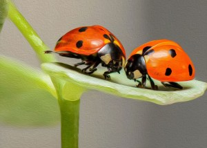 lady bug kiss