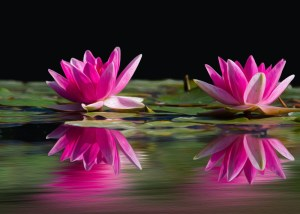 Water lily Southern Institute for Women's Sexual Health