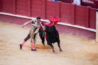bull fighting-22