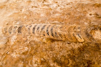 fossils and camels-4