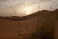 sunrise sahara-14