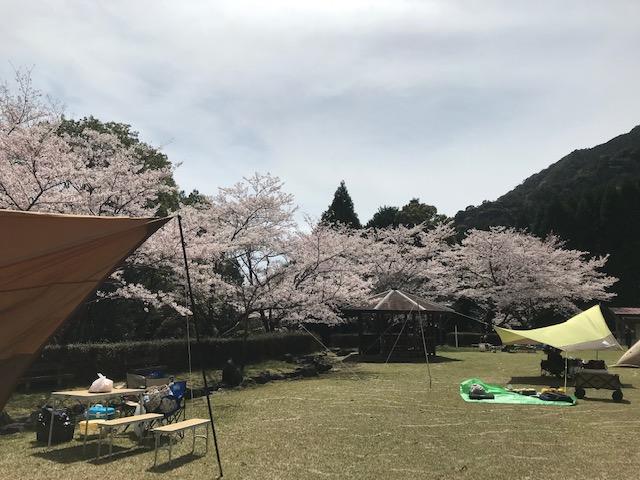 無料キャンプ場 佐賀県 乳待坊公園いこいの広場 花見