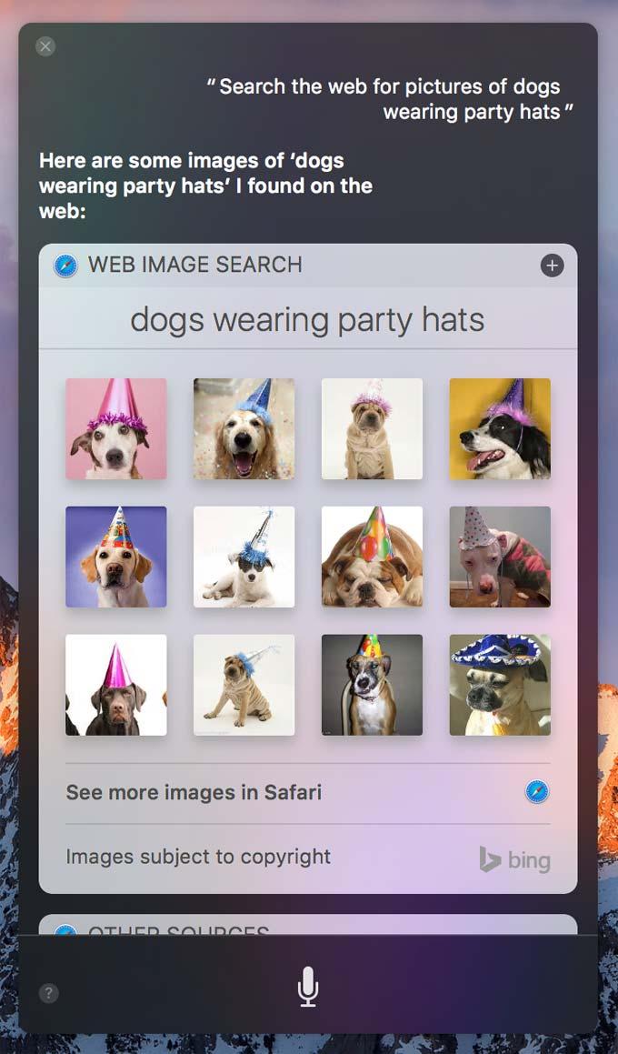 sierra-dogs-wearing-hats