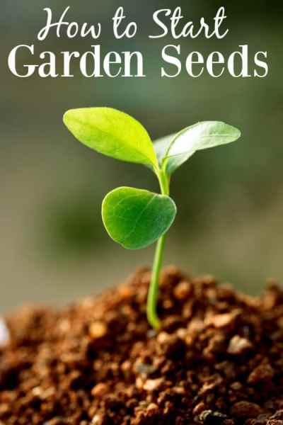 Having a garden is a fantastic way to save money on groceries, but if you're a new gardener it can be hard to get things growing. Learning how to start seeds is your first step to lush and flavorful fruits and veggies grown right in your own backyard!