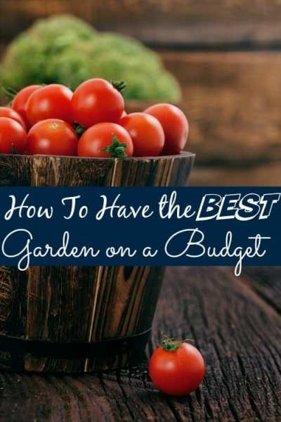 How to Garden On a Budget - Ever wanted to have the absolute best garden on the block? These tips for how to have the BEST garden on a budget are just what you need to get started!