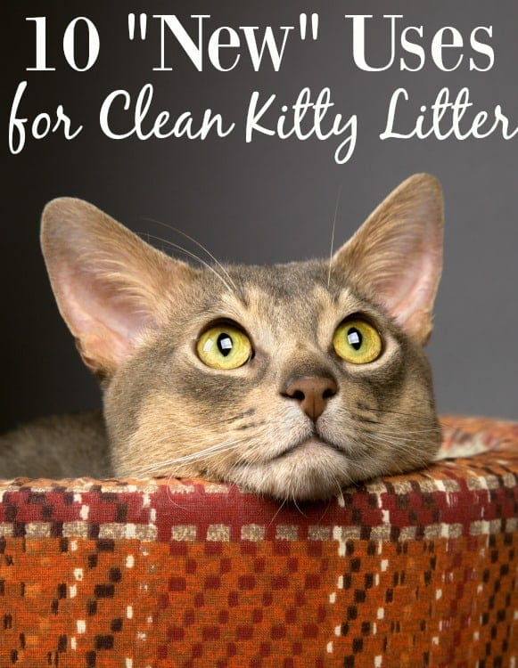 """Even if you don't have a cat, you should still keep kitty litter on hand! These 10 """"New"""" Uses for Kitty Litter are all great and do NOT involve the cat!"""