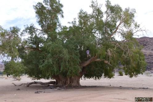 Big Tree, Orange River