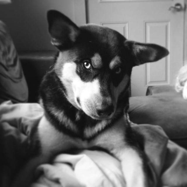 Such a puppy