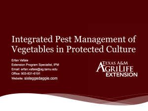 Integrated Pest Management of Vegetables in Protected Culture Presentation