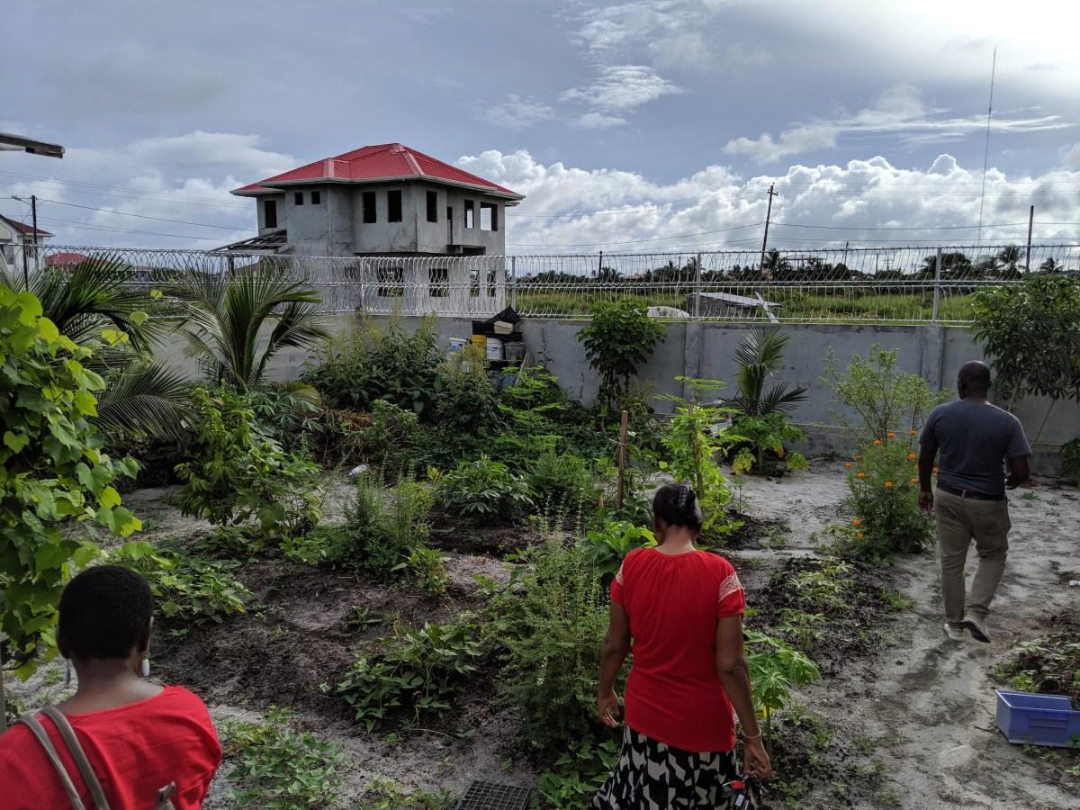 Guyana Farm Visit 4: Permaculture in Georgetown