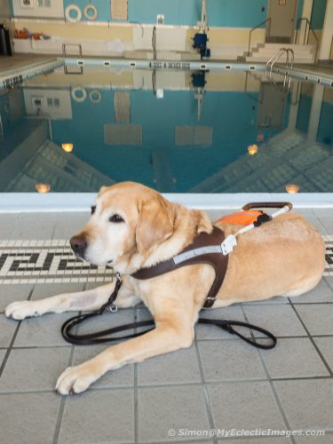 Otto von Guidemeister Lounging Poolside at the Hyatt Regency Rochester (©simon@myeclecticimages.com)