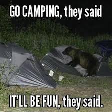 bear tent