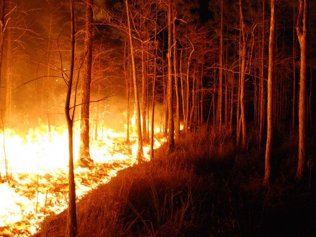 california camp fire fundraising