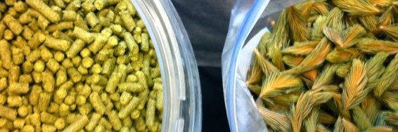 Simcoe hops and spruce tips, the spices of this Mad Scientists Series beer