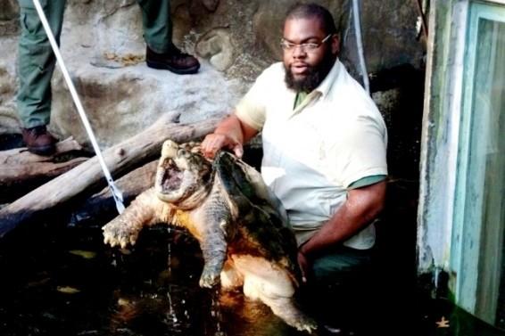 big@$$turtle