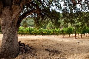 Michael's Vineyard, Six Sigma Ranch