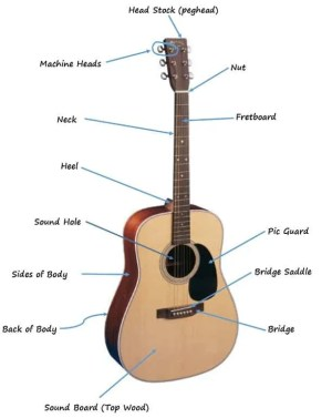 The Parts of the Acoustic Guitar Diagram | Six String Acoustic
