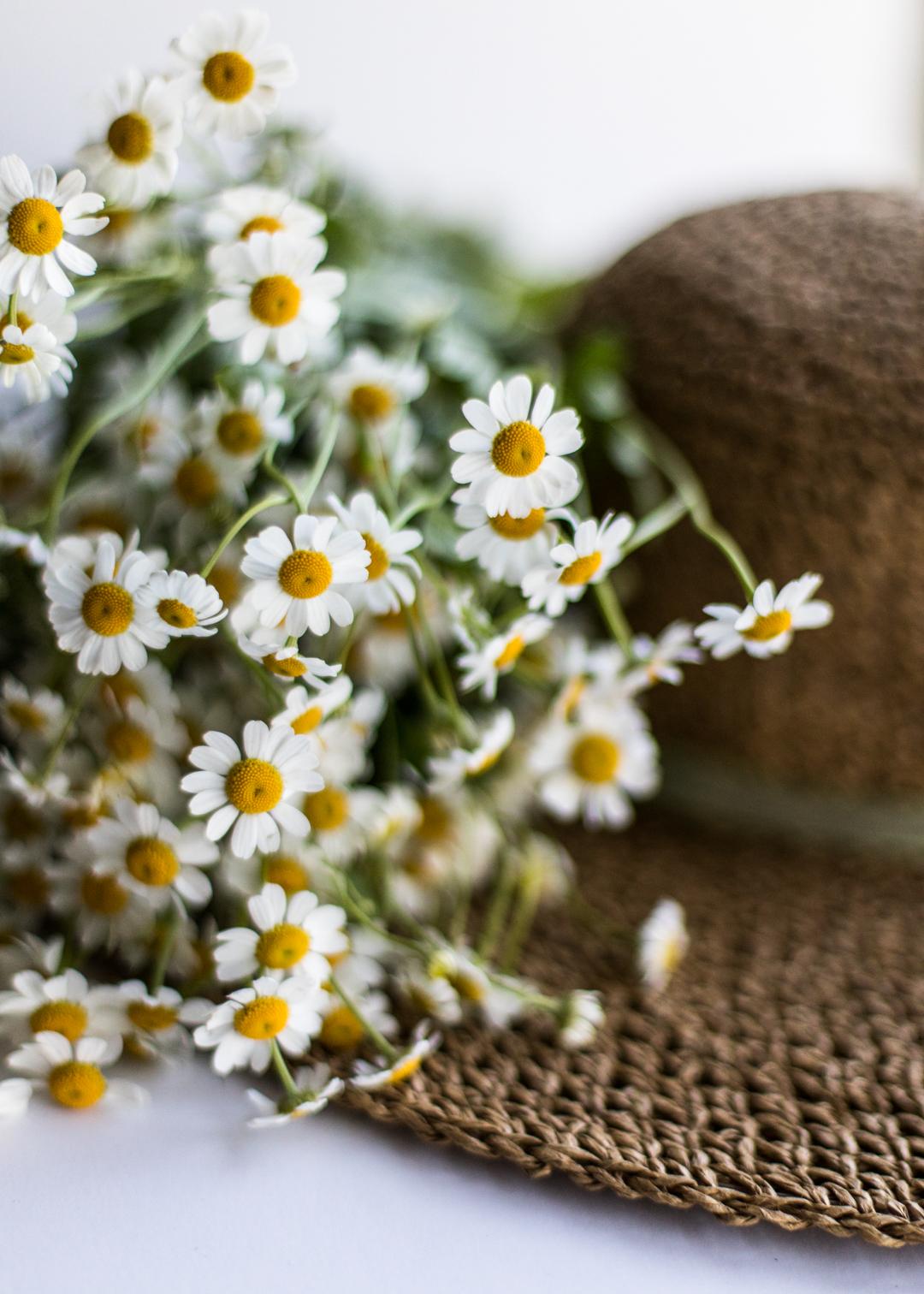 Daisies & Summer Hat-1