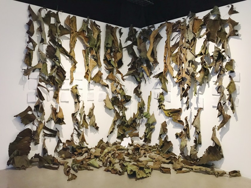 Image: Photo capturing the decay of banana leaves. The once big green banana leaves that covered the white gallery walls have withered. Some of the yellow and brown leaves are still fastened to the wall, while many others have fallen, creating a large mound on the floor. Visible behind them on the wall are squares of white paper with Devyn's poems on them, the text is not visible. Some of the pages are totally obscured by the dried out leaves, but some are clear. Photo courtesy of artist.