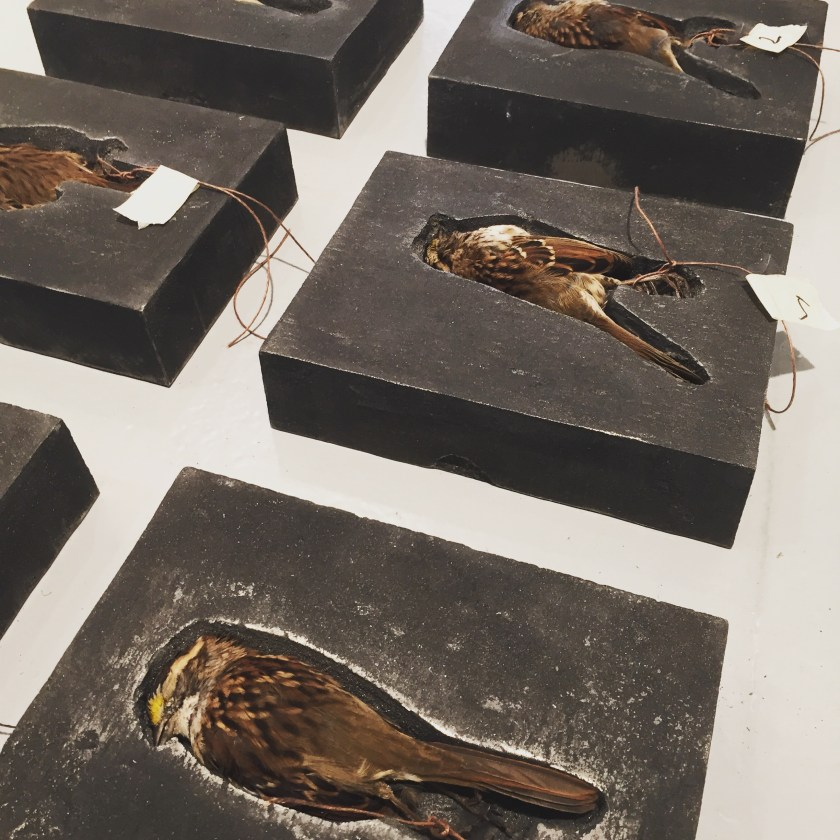 Image:  Selva Aparicio, Interrumpidos, (Interrupted), ongoing series. Cast iron, dead birds. The image shows two rows of cast iron blocks that contain dead birds. The birds are mostly brown and each have a tag tied on their feet. Image courtesy of the artist.