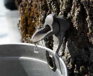 photo of tap in tree trunk