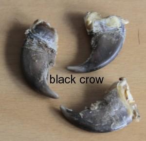 Klauwen-Tanden - Scrap Fur - Hair - Tails