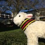 Agnes the Access Lamb in Kendrew Quad