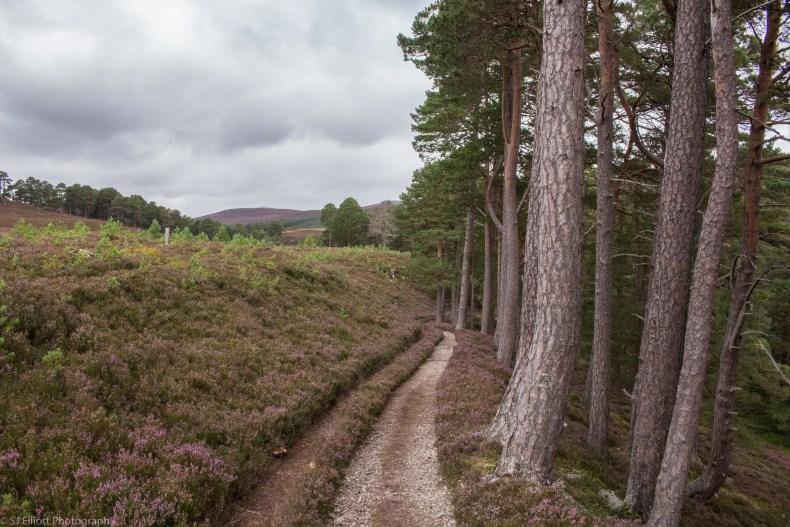 Path-to-the-Linn