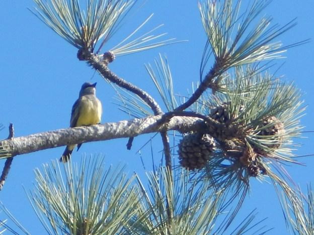 Torrey Pines Golf Course Bird